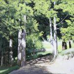보성차밭-눈부시게 좋은날 72.5X72.5cm Oil on canvas 2016